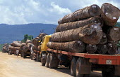 Logging trucks, usually with Vietnamese license plates carry vast amounts of prime hardwood out of Laos on a daily basis. Laos - Jim Holmes - 2000s,2001,agricultural,agriculture,asia,asian,asians,clearing,country,countryside,cut,cutting down,Deforestated,deforestation,degradation,developing,EBF,Economic,Economy,eni,environment,Environmental