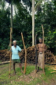 Cinnamon workers, Sri Lanka. - Tom Parker - 2000s,2005,AGRICULTURAL,agriculture,bark,by hand,capitalism,capitalist,cultivation,EARNINGS,EBF Economy,EQUALITY,estate,estates,farm,farm worker,farm workers,farmed,farmhand,farmhands,farming,farmwork