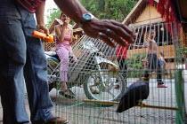 Bird in cage in Laos Market. - Tom Parker - 04-04-2007