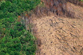 Commercial exploitation of hardwood timbers in Northern Laos. The rapid deforestation is causing serious land erosion - Tom Parker - 04-04-2007