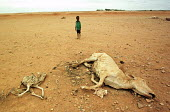 A boy stands close to the carcasses of animals during the worst famine and drought in two decades. Gode, Ethiopia. 2000 - R. Chalasani - 30-04-2000
