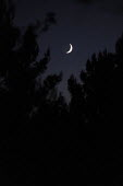 Waxing moon above the pine trees at the Buddhist Retreat Centre Guhyaloka, Spain - Timm Sonnenschein - 23-08-2009