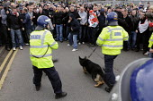 Members of the far right English Defence League riot and provoke Police officers and their dogs during their protest against the building of a new mosque in Dudley - Timm Sonnenschein - , Protest,2010,2010s,activist,activists,adult,adults,against,animal,animals,building,BUILDINGS,CAMPAIGNING,CAMPAIGNS,CLJ,Defence,DEFENSE,DEMONSTRATION,dogs,EDL,English Defence League,force,ISLAM,ISLAM