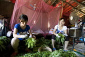 Migrant farmworkers prepare cultivated garlic for sale in their shack on the outskirts of Shanghai - Timm Sonnenschein - 31-07-2010