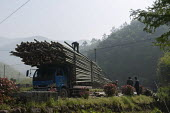 Workers loading a lorry with bamboo trunks, Moganshan, China - Timm Sonnenschein - Chinese,2010s,2014,agricultural,agriculture,capitalism,capitalist,China,crop,crops,EBF,Economic,Economy,employee,employees,Employment,farm,Farm Worker,farm workers,farmed,farmer,farmers,farmhand,farmh