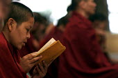 A nun reads through the scriptures at the prayer congregation of the Namgyal monastery in McLeod Ganj, Dharamsala, India. Mcloedganj is been the seat of the Tibetan exile government since 1959. With t... - Tashi Tobgyal - 11-10-2007