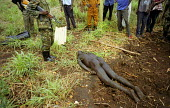 UPDF soldiers find the body of a villager who was one of three villagers abducted and killed by LRA rebels while they tried to protect their village from an attack. Gulu, northern Uganda 2005 - Thomas Morley - 2000s,2005,africa,african,Africans,Armed Forces,army,bodies,body,brutal,brutality,conflict,conflicts,corpse,dead,dead body,death,deaths,developing,died,east,lords,lord's,lra,male,man,men,military,mort