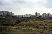 Dilapidated tower blocks sit upon the high ground over looking Georgias capital Tbilisi have been home for many of the 350,000 Abkhazian refugees since the war in 1993. More than 40,000 people were ki... - Thomas Morley - ,2000s,2003,Abkhaz,Abkhazian,Abkhazians,Abkhazs,ACE,architecture,asia,asian,asians,buildings,capital,caucasus,central asia,Civil War,conflict,culture,Diaspora,Dilapidated,displaced,Eastern Europe,eu,e