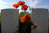 British and Commonwealth first world war cemetery at Mont Huon, Somme region, France. There are around 3000 soldiers buried here. Symbolic red poppies grow around the headstones - Paul Mattsson - 07-06-2004