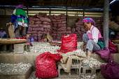 Elderly Bai women preparing garlic for sale at the local market, Dali, Yunnan Province, China. - Connor Matheson - 18-09-2015