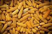 Corn on the cob drying out, for sale in the local market, Dali, Yunnan Province, China. - Connor Matheson - 18-09-2015