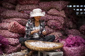 Elderly women preparing garlic for sale at the local market, Dali, Yunnan Province, China. - Connor Matheson - 18-09-2015