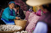 Elderly Bai women preparing garlic for sale on the local market, Dali, Yunnan Province, China. - Connor Matheson - 18-09-2015