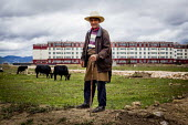 An elderly man looking after his Yacks near a block of flats where most farmworkers live. Shangri La, Yunnan Province, China. - Connor Matheson - Chinese SUBSISTENCE,2010s,2015,age,ageing population,agricultural,agriculture,capitalism,capitalist,cattle,china,domesticated,Domesticated Ungulate,EARNINGS,EBF,Economic,Economy,elderly,employee,emplo