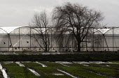 Crows and horticultural greenhouses, Warwicksire - John Harris - 2010s,2013,agricultural,agriculture,animal,animals,bird,birds,capitalism,capitalist,CLIMATE,conditions,crop,crops,crow.crows,EBF,Economic,Economy,ENI,environment,Environmental Issues,farm,farmed,farmi