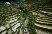 Farm and rice terraces in the rain, farming in the Sapa mountains, Vietnam - David Bacon - 16-12-2015