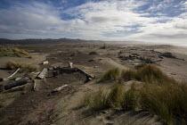 Driftwood on Ten Mile Beach, Inglenook Fen Ten Mile Dunes Natural Preserve, MacKerricher State Park, California coast. - David Bacon - 08-02-2016
