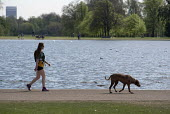 Woman walking a dog, Kensington Gardens, London - Philip Wolmuth - tourism, tourists,2010s,2016,animal,animals,canine,cities,City,dog,dogs,exercise,exercises,exercising,FEMALE,holiday,holiday maker,holiday makers,holidaymaker,holidaymakers,holidays,jogger,joggers,jog