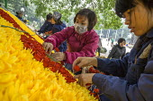 Women preparing a floral display, Lenin Park, Hanoi, Vietnam - David Bacon - 2010s,2015,ACE,arrangement,Asia,asian,asians,Culture,display,displays,face mask,face masks,female,females,flower,flowering,flowers,girl,GIRLS,Hanoi,HORTICULTURAL,horticulture,Lenin,mask,masked,masks,m