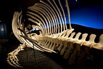 Blue Whale skeleton, Husavik Whale Museum, Husavik, Iceland - Jess Hurd - 08-05-2016