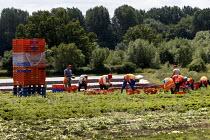 Migrant workers picking lettuce, Warwickshire - John Harris - 05-07-2016