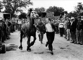 The Appleby Horse Fair, 1978 Tom Harker and his brother Hannibal running the horses in front of buyers, Ten thousand English and Welsh Gypsies, Scottish Gypsy, Travellers and Irish Travellers converge... - David Mansell - , Gipsy, Gypsy, gypsys, Irish Traveller, Roma, Romani, Romany, Rommany,1970s,1978,ACE,ace culture,animal,animal animals,animals,BAME,BAMEs,BEMM,BEMMs,BME,bmes,breeder breeders,buy,buyer,buyers,buying,