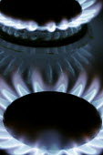 A gas flame on the burners of a domestic gas cooker. - Mark Pinder - 14-03-2006