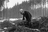 Forestry workers felling trees in the snow, Ladyhill, Kielder Forest, Northumberland 1985 - Denis Doran - 22-01-1985