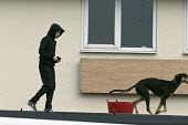 Dogs on the roof guarding a pub being refurbished, Bentilee, Stoke on Trent, Staffordshire - John Harris - 2010s,2017,adolescence,adolescent,adolescents,animal,Animal Welfare,animals,boy,boys,building,buildings,canine,child,CHILDHOOD,children,cities,City,dog,dogs,excluded,exclusion,Guard,guarding,guards,HA