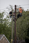 Engineers up a Telegraph pole, Wales - Jess Hurd - 2010s,2016,British Telecom,BT,EBF,Economic,Economy,employee,employees,Employment,engineer,engineers,hard hat,hard hats,hazard,hazardous,hazards,Health and Safety,height,high up,job,jobs,LBR,lines,main