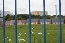 Longbridge closed car factory and housing, Birmingham - Jess Hurd - 2010s,2016,AUTO,AUTOMOBILE,AUTOMOBILES,AUTOMOTIVE,Birmingham,car,CARS,cities,City,closed,closing,closure,closures,development,FACTORIES,factory,flower,flowering,flowers,housing,Longbridge,outdoors,Par