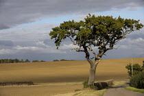 Country lane, Cambridgeshire - Jess Hurd - 2010s,2016,agricultural,agriculture,Cambridge. Cambridgeshire,capitalism,Country,EBF,Economic,Economy,farm,farmed,farming,farmland,farms,field,fields,highway,Industries,industry,land,Lane,producer,pro