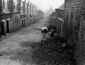Easington pit village County Durham, 1948. A mother and her daughter collecting coal tipped outside their house - Elisabeth Chat - 01-06-1948