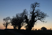 Trees at dusk, Warwickshire - John Harris - 07-04-2017