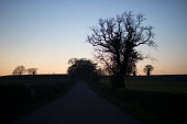 Trees at dusk, Warwickshire - John Harris - 2010s,2017,agricultural,agriculture,country,countryside,dusk,ENI,environment,Environmental Issues,EVENING,farm,farmed,farming,farmland,farms,field,fields,highway,nature,night time,outdoors,outside,pro