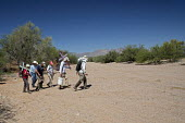 Tucson, Arizona, USA Mexican Border, Tucson Samaritans placing crosses in the desert where the remains of immigrants were found. Hundreds of migrants from Mexico and Central America die trying to evad... - Jim West - 18-04-2017