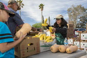 Marana, Arizona, USA Volunteers from St. Christpher Catholic Parish distributing produce provided by the Borderlands Food Bank. It distributes 30 to 40 million pounds of produce each year that would o... - Jim West - 08-04-2017