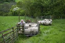 Farmer preparing sheep for shearing, The Vale of Ewyas, Wales - Philip Wolmuth - 21-05-2017