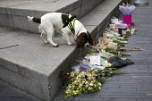 Explosives dog sniffs floral tributes at a Vigil to honour victims of the London Bridge terrorist attack, City Hall, Potters Fields Park, London. - Jess Hurd - 2010s,2017,activist,activists,animal,animals,attack,attacking,attacks,bouquet,Bridge,bunch of,CAMPAIGN,campaigner,campaigners,CAMPAIGNING,CAMPAIGNS,cities,City,City Hall,Counter Terrorism,Counter Terr