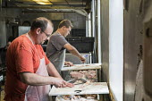 Charlevoix, Michigan, USA, Workers cleaning and filleting freshwater whitefish, John Cross Fish Market. The fish were caught in Lake Michigan - Jim West - 28-06-2017
