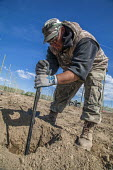 Washington, USA H2A Mexican temporary contract workers setting up supports for planting apple trees in an field owned by Stemilt Growers. The company has trained them to do this skilled work - David Bacon - 04-05-2017