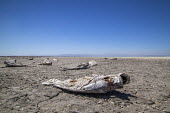 Coachella Valley, California, USA Dead fish on the edge of the Salton Sea, Salton City. The salt water leaves a dry crust on the soil as the sea dries up with receeding waters. On the hardpan are dead... - David Bacon - 18-08-2017