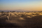 Imperial Valley, California, USA Sprinklers irrigating crops - David Bacon - 17-08-2017