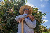 Coachella Valley, California, USA. Elderly farm worker working in a grove of organic Keitt mango trees, digging out moles. Avas Mangos, the largest organic mango grower in California - David Bacon - 2010s,2017,age,ageing population,agricultural,agriculture,american,americans,amerindian,amerindians,animal,animals,BAME,BAMEs,Black,BME,bmes,by hand,California,capitalism,Coachella Valley,cultivation,