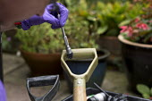 Forensic scene of crime investigator dusting for fingerprints and searching for clues after an attempted break in to a house, Warwickshire. Dusting for prints on the handle of a spade used to try and... - John Harris - 2010s,2017,break,Break in,brush,brushes,burglar,burglars,burglary,CLJ,clue,clues,Crime,crime scene investigation,CSI,DNA,EGT,employee,employees,Employment,Evidence Gathering Team,fingerprint,fingerpri