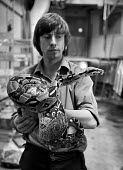 Zoo keeper with a python, London Zoo - NLA - 02-12-1980