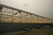 Winter growing tomato greenhouse using LED lighting, Vale of Evesham, Worcestershire. An unusual red looking sky and sun due to Hurricane Ophelia dragging in tropical air and dust from the Sahara dese... - John Harris - 16-10-2017