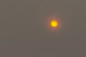 An unusual red looking sky and sun due to Hurricane Ophelia dragging in tropical air and dust from the Sahara desert, Eveshem, Worcestershire - John Harris - 16-10-2017