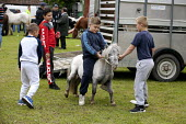 Horsmonden Gypsy Horse Fair, Kent. Horses on the village green, known as the Heath. For a few hours it becomes an important social event for the Gypsy and Traveller community. A group of boys and thei... - David Mansell - 13-09-2015