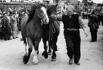 Joe Wilson, Appleby Horse Fair, Cumbria 1978. Showing horses along Flashing Lane, trotting them to attract buyers - David Mansell - ,1970s,1978,animal,animals,Appleby Horse Fair,dealer,dealers,dealing,Domesticated Ungulates,equestrian,equine,Fair,Flashing,gipsey,Gipsey Gipsy Gypsey,Gipsies,Gipsy,gypse,gypsey,Gypsie,Gypsies,Gypsies